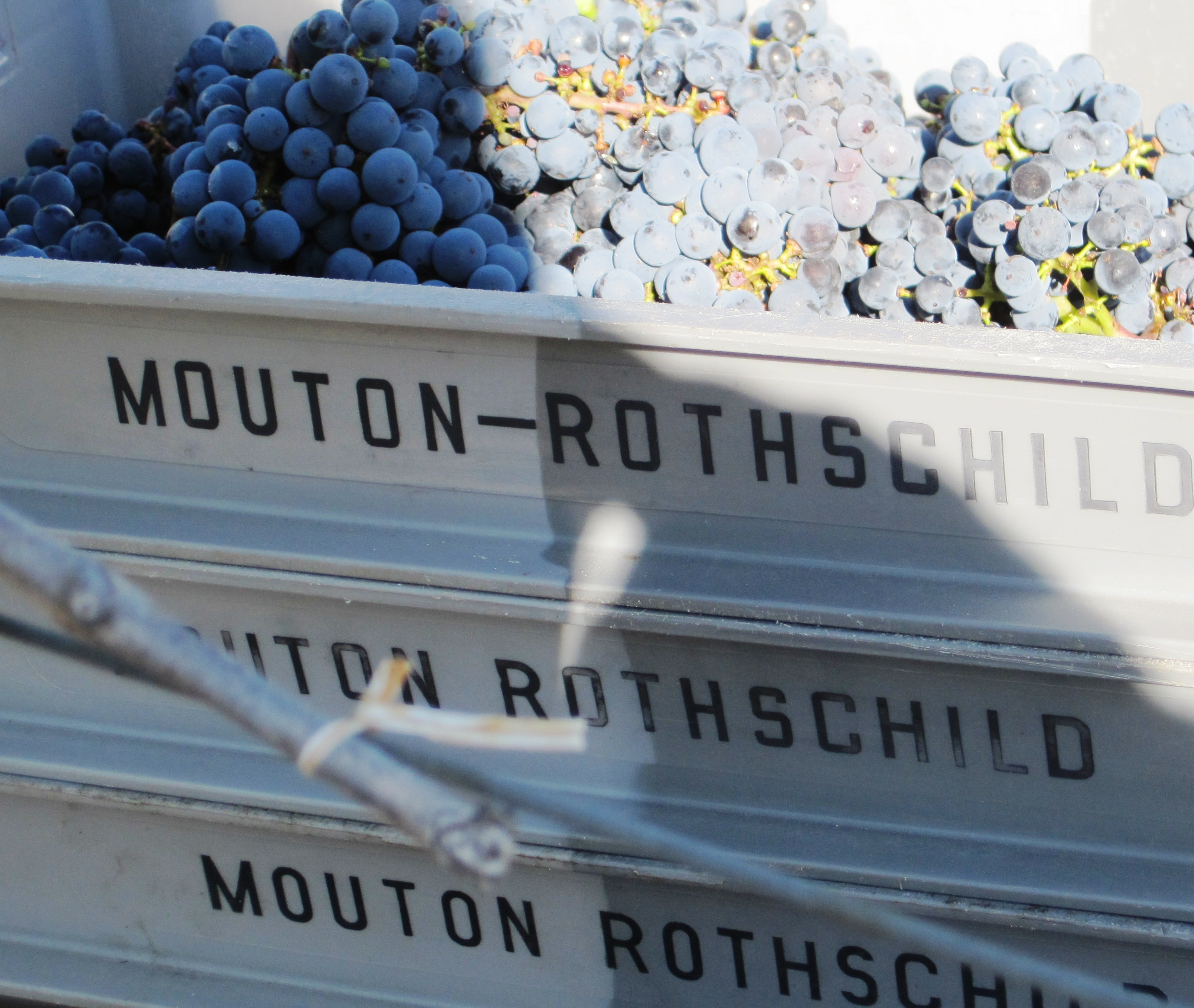 Learn About Chateau Mouton Rothschild Pauillac Complete Guide
