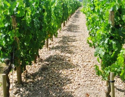 Pomerol Gravel Clay Terroir1 Learn about Pomerol Bordeaux, Best Wines Chateaux Vineyards Character