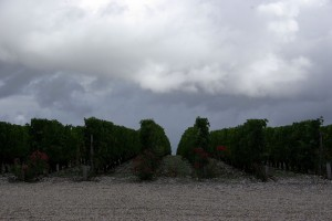 2010 Brane Rain 300x200 2010 Bordeaux Harvest Massive Storm Trashes the Medoc