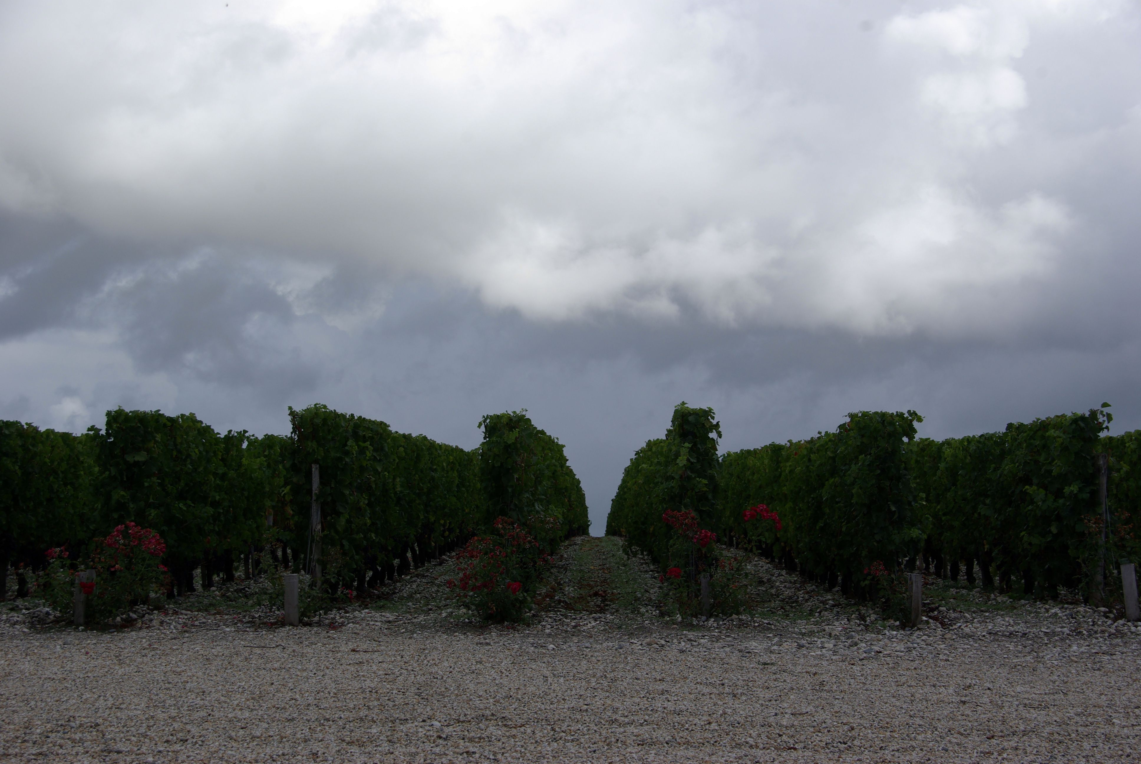 2010 Bordeaux Harvest Massive Storm Trashes the Medoc