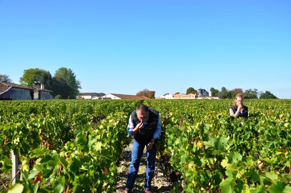 2010 Chateau Palmer Harvest Thomas Duroux Interview