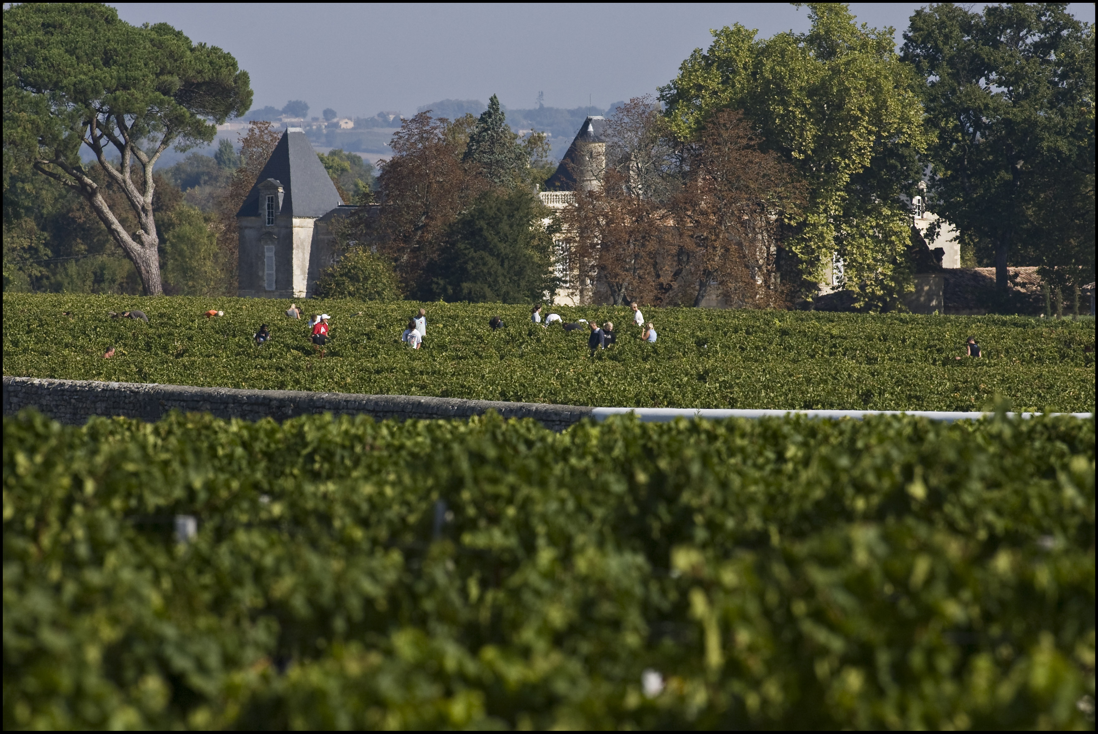 2010 Chateau d'Issan Harvest, Warm Days, Cool Nights in Margaux