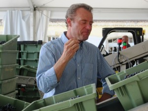 Margaux Paul grapes 300x226 2010 Chateau Margaux Harvest Paul Pontallier talks Biodynamics