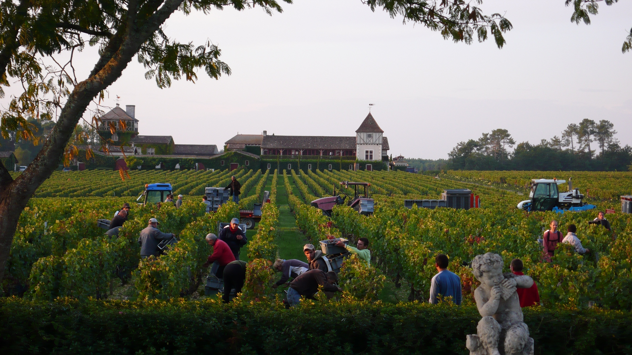 2010 Smith Haut Lafitte Harvest, Interview with David Ornon