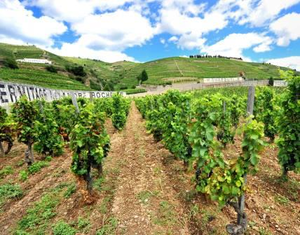 Hill of Hermitage Complete Guide to the Northern Rhone, Best Wines, Wineries, Vineyards