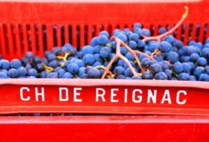 REIGNAC 2011 Grapes 300x204 Chateau Reignac Bordeaux Superieur Wine, Complete Guide