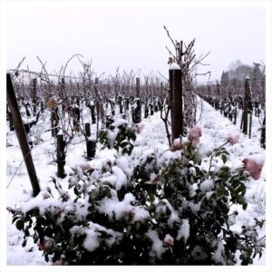 bordeaux snow 300x300 Happy Holidays from The Wine Cellar Insider