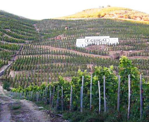 cote rotie hills Rhone Valley The Complete Guide