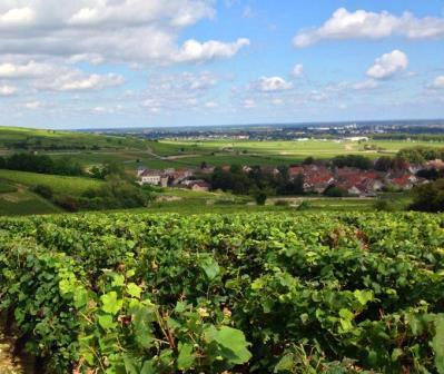 Rhone Valley Complete Guide Cote Rotie Hermitage Chateauneuf du Pape