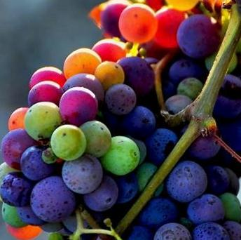 Grapes colors Wine Grape Guide Flavor Character Food Pairing Tips for Red White Wine