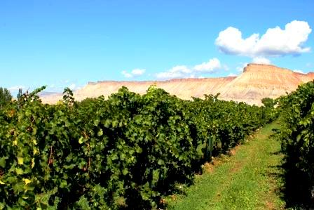 Colorado Wine Industry Enters a Higher State with Colorado Wine