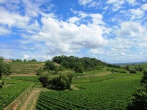 French Vineyard 300x225 China and Bordeaux Wine, The Complete Story, Current Situation Today