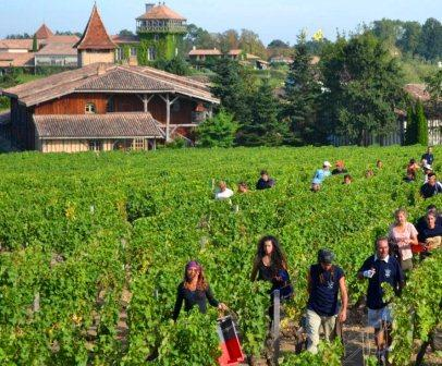 smith harvest 2012 2016 Bordeaux Harvest and Vintage Report