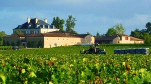 2012 Haut Bailly Harvest1 300x168 2012 Bordeaux Harvest Pessac Leognan News Updates