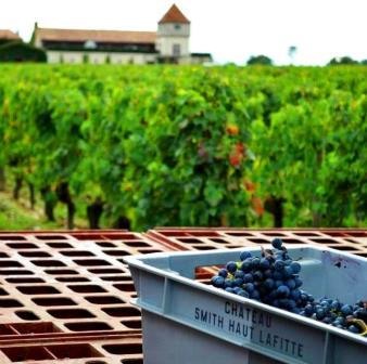 2012 Smith Haut Lafitte Harvest 2012 Smith Haut Lafitte a True Bordeaux Pessac Leognan Wine