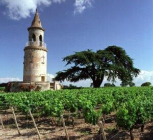 La Tour de By1 300x275 Chateau La Tour de By Medoc Bordeaux Wine, Complete Guide