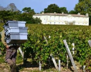 2013 Smith Haut Lafitte Pickers 300x236 2013 Smith Haut Lafitte Harvest Vintage Report Interview