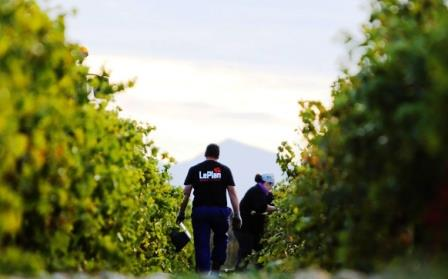 Learn about domaine leplan vermeersch chateauneuf - Guide du papa ...