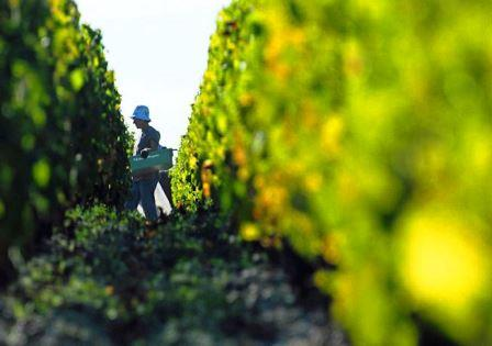 2017 Bordeaux Vintage, Harvest Report, with 2017 Release Price News