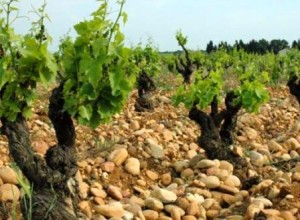Learn About Southern Rhone Best Wines Wineries Vineyards