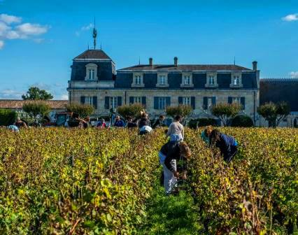 2014 Bordeaux Vintage Harvest 2014 Bordeaux Vintage Summary, Harvest Report
