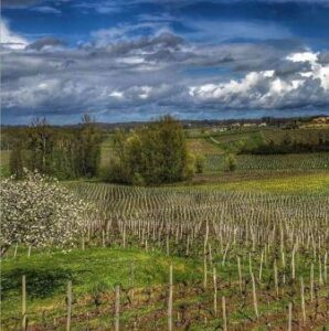 BORDEAUX VINEYARD 298x300 2 Saint Emilion Grand Cru Classe Vineyards Sold in the Same Week!